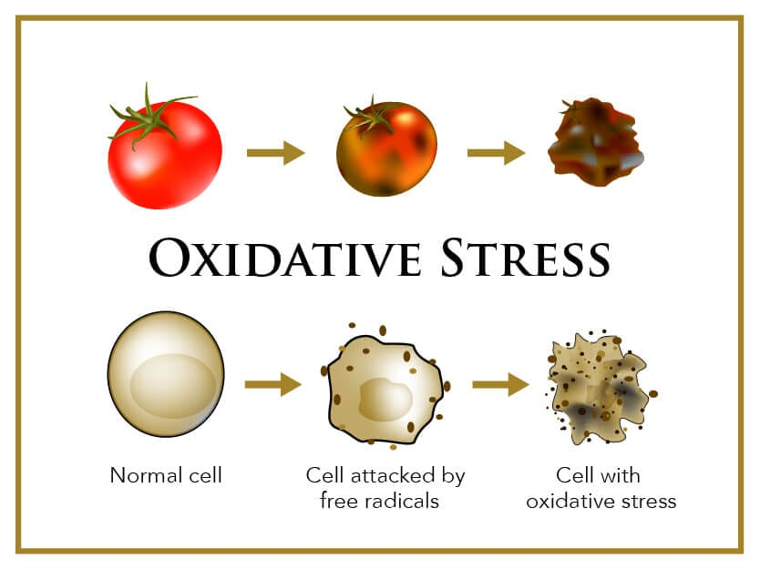 What're Free Radicals & Antioxidants