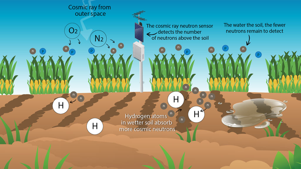 Molecular hydrogen in plants growth and in agriculture